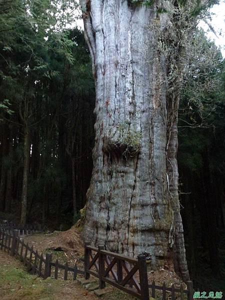 水山巨木20140125(74)