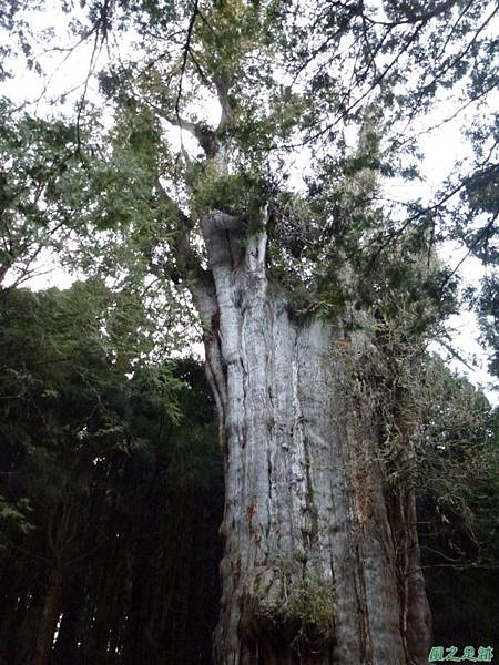 水山巨木20140125(75)