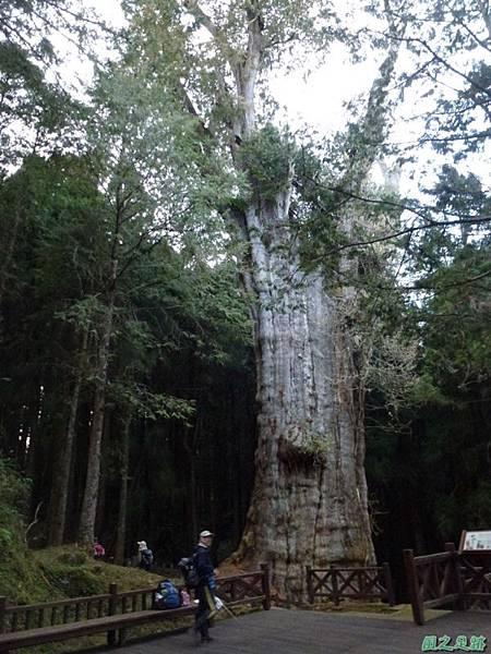 水山巨木20140125(76)