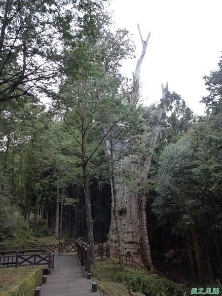 水山巨木20140125(77)