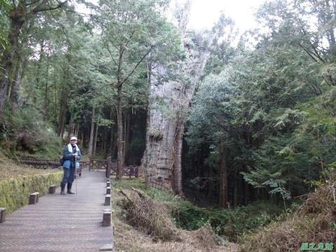 水山巨木20140125(78)