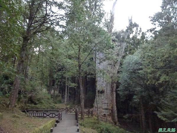 水山巨木20140125(79)