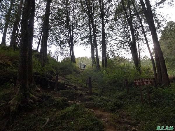 水山巨木20140125(80)
