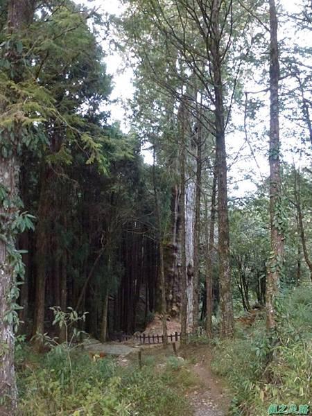 水山巨木20140125(81)