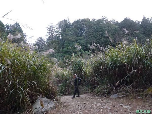 水山巨木20140125(82)