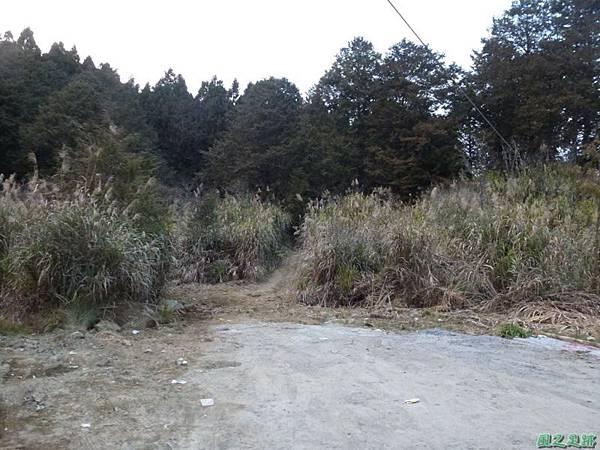 水山巨木20140125(84)