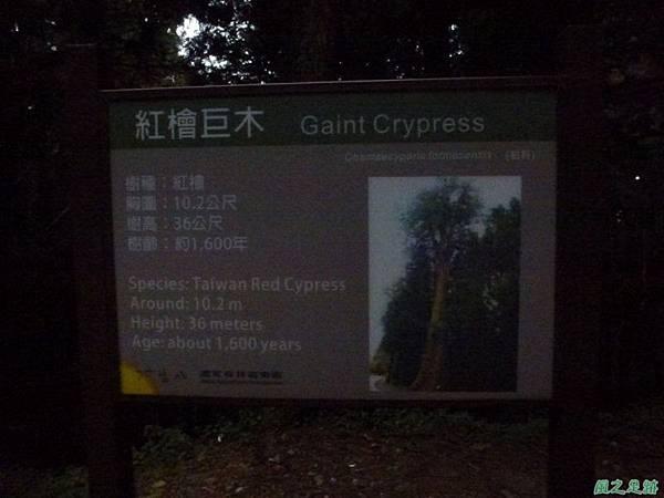 水山巨木20140125(92)