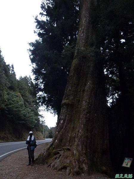 水山巨木20140125(93)
