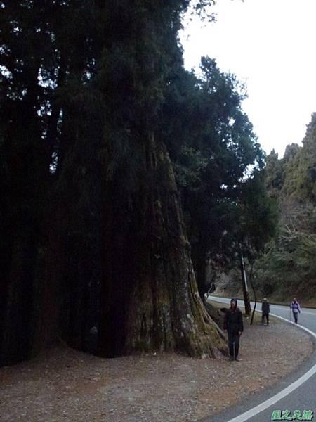 水山巨木20140125(94)