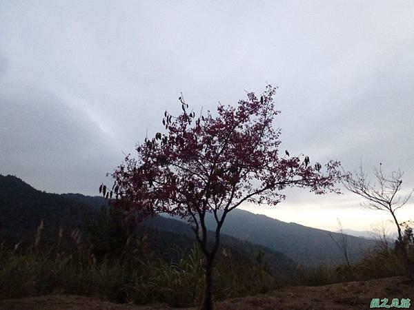 水山巨木20140125(96)