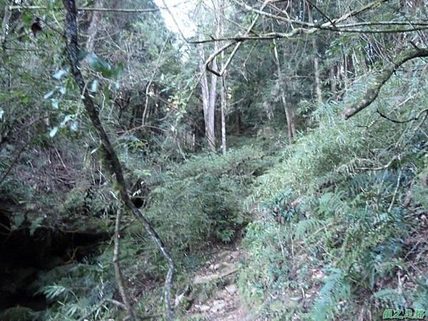 小笠原山20140125(31)