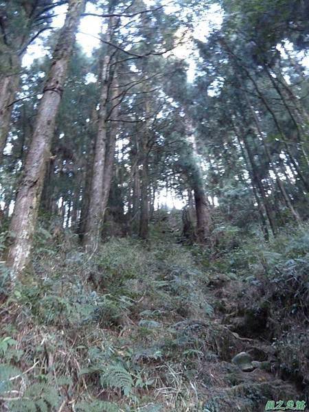 小笠原山20140125(33)