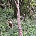 千兩山20051009(35).jpg