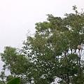 千兩山20051009(45).jpg