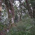 千兩山20051009(57).jpg