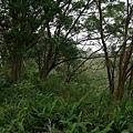 千兩山20051009(66).jpg