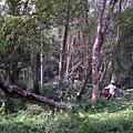 千兩山20051009(72).jpg