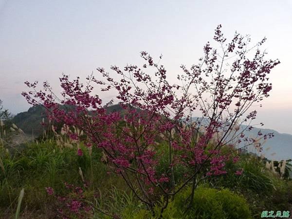烏嘎彥山20140131(82)