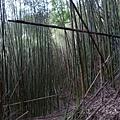 蘇魯山20140329 (8)