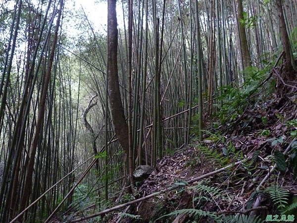 蘇魯山20140329(71)