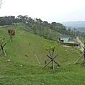 20140404上樟樹林山(4)
