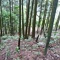 20140413春天的森林(2)