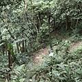 20140429竹雞(2)
