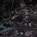 20140429竹雞(3)
