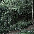 20140429竹雞(5)