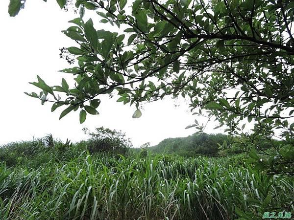 輕海紋白蝶20140601(1)