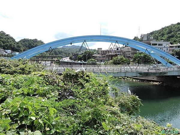 黃頸黑鷺20140705(18)