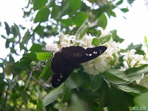 20050626生態園賞蝶1