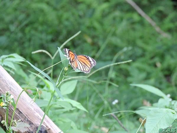 二叭子植物園20140713(15)