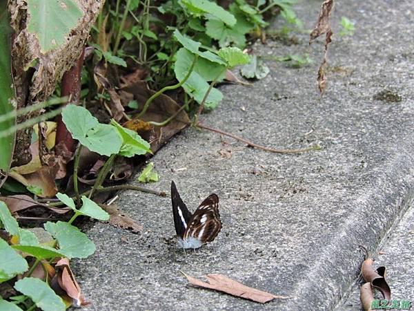 二叭子植物園20140713(16)