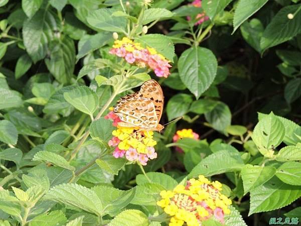 二叭子植物園20140713(33)
