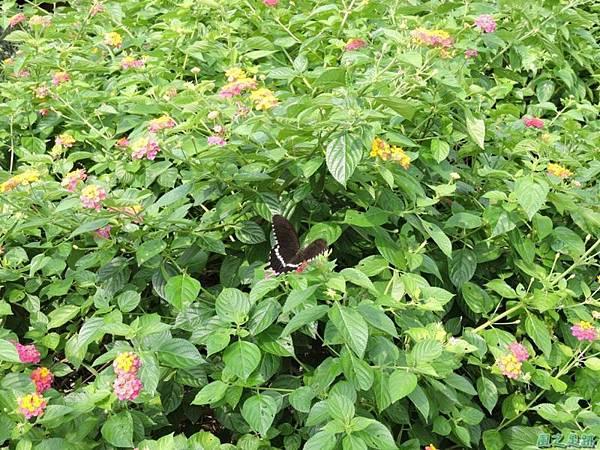 二叭子植物園20140713(34)