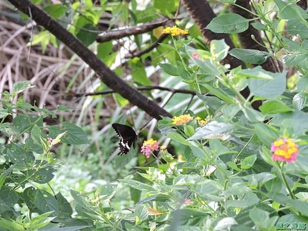二叭子植物園20140713(35)