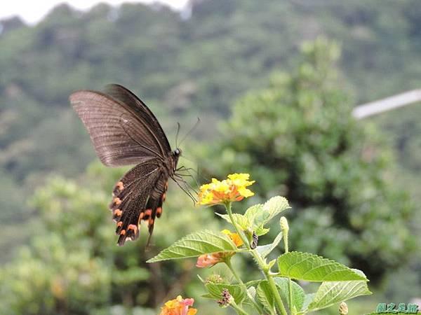 二叭子植物園20140713(37)