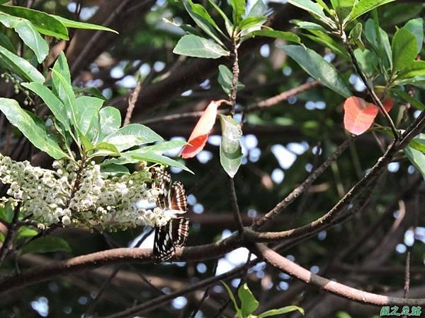 二叭子植物園20140713(42)