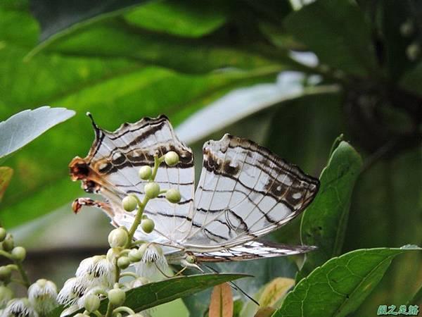 二叭子植物園20140713(44)