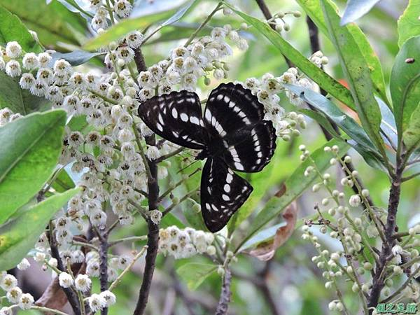 二叭子植物園20140713(45)