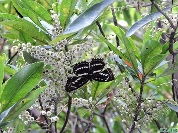 二叭子植物園20140713(46)