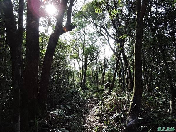 虎寮潭山20140705(61)