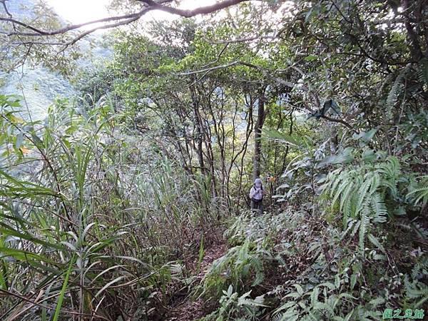 虎寮潭山20140705(91)