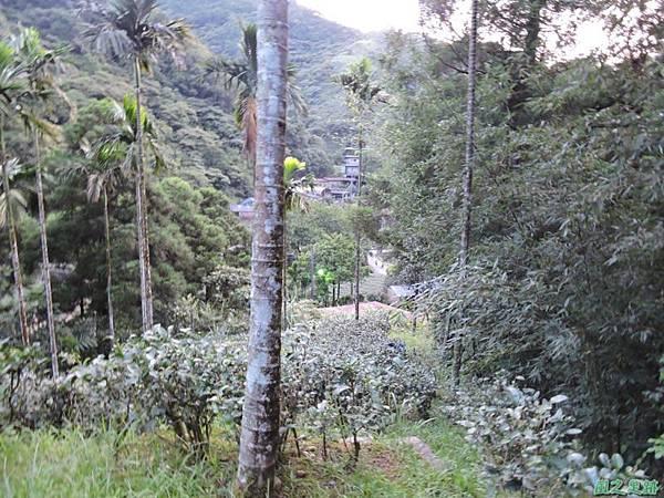 虎寮潭山20140705(100)
