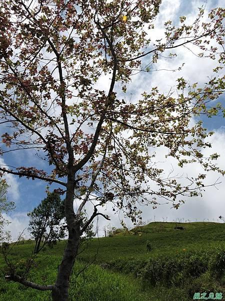20140819六十石山(54)