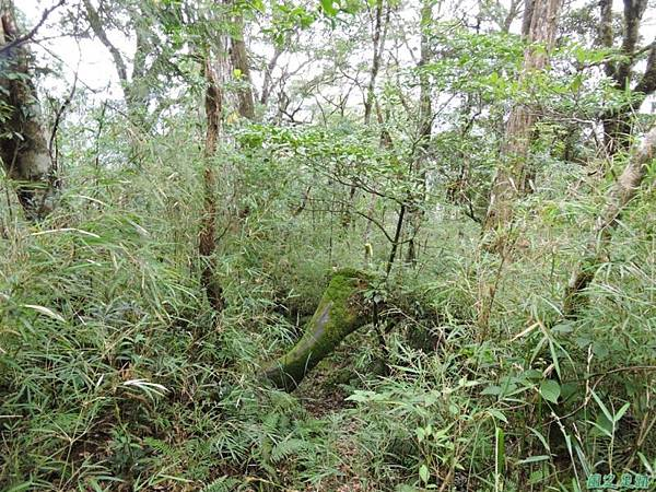 20140906婆羅山(26)