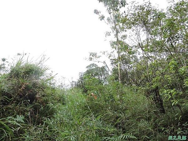 20140906婆羅山(31)