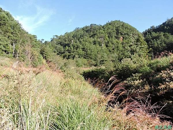 羅葉尾山20140907(21)