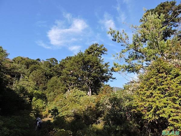 羅葉尾山20140907(35)